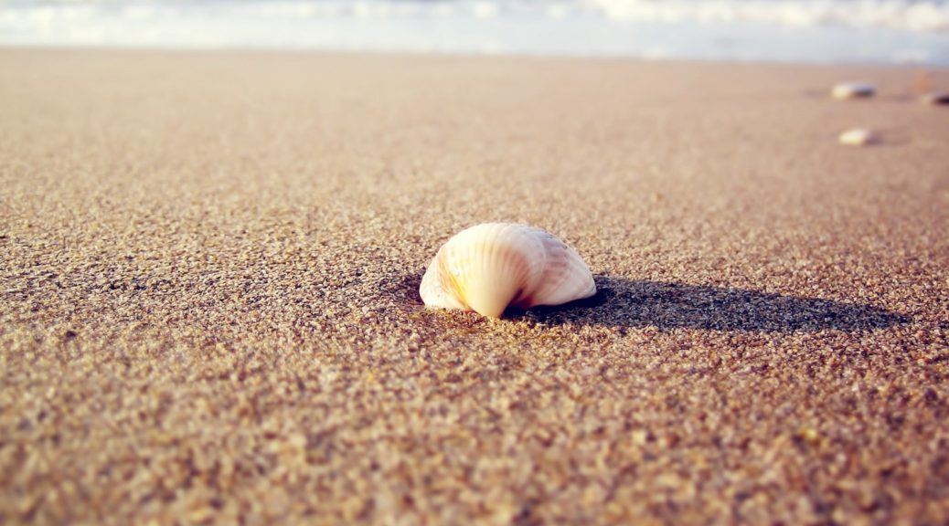 2560x1600_px_macro_nature_sand-723591